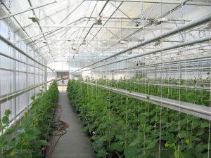 اسکلت گلخانه، ساخته شده از لوله گالوانیزه موسوم به لوله گلخانهای