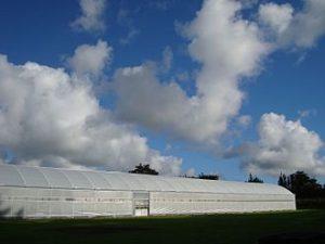 یک گلخانه با پوشش پلاستیک سقف و دیوارهها در زلاندنو