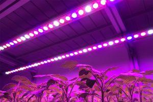 نورپردازی یک گلخانه در شب با لامپهای LED