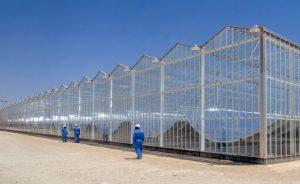 گلخانه های شرکت Glasspoint solar که برای تولید بخار آب از نور آفتاب استفاده میکنند.